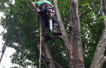 tree services - serving southern vermont